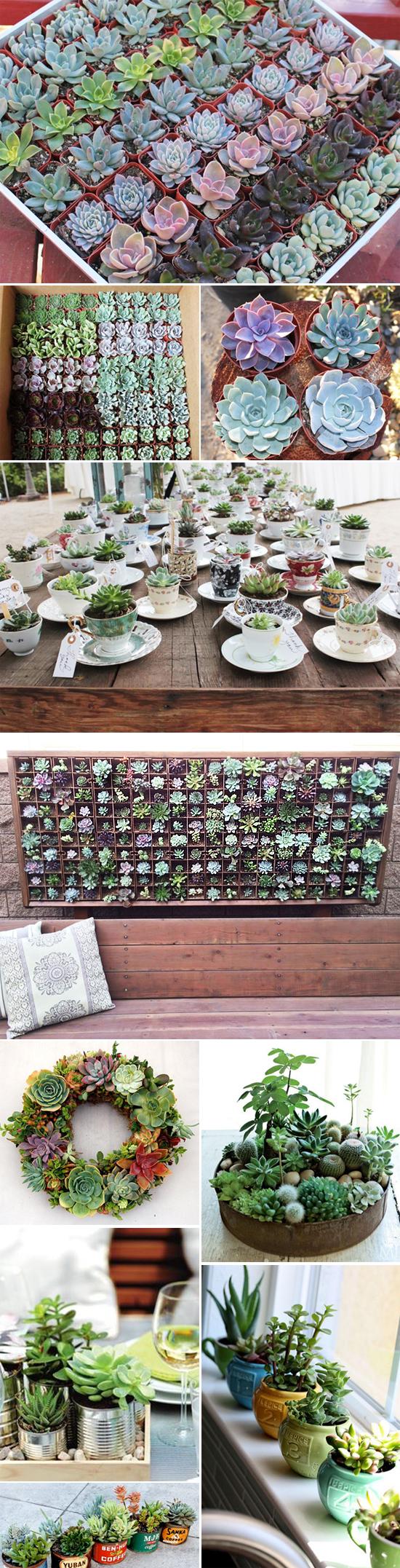 piante_succulente_idee