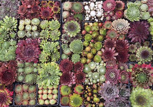 succulente_piante_1